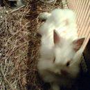 Moj zajček