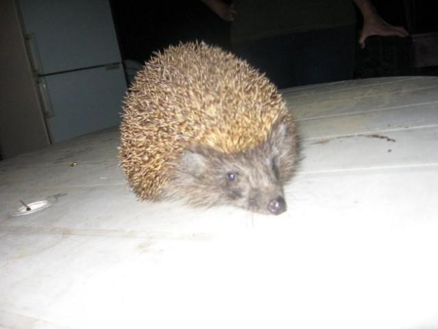 Razne živali - foto