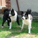 Coudy & Bayka