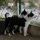 Bayka i Vista, cuvari kuce / Bayka and Vista are guardians of the house