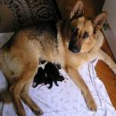 Asta sa karelijancima / Asta with KBD puppies