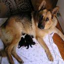Asta sa karelijancima / Asta with KBD puppies