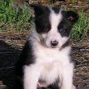 Cura7/Female7 5 tjedana/weeks old