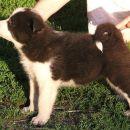 Cura4/Female4 5 tjedana/weeks old