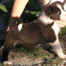 Cura1/Female1 5 tjedana/weeks old