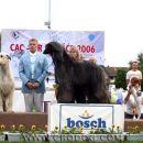 CAC BElišće - Zoa je osvojila 3. mjesto u X. FCI skupini