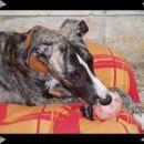 Santo je oštenjen 02.04.2006. u leglu dobivenom parenjem Ch. Nevedith Eefa Empra& Ch. Lorr