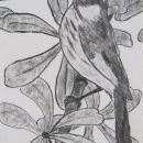 Ptica Pivka, OGLJE, 30x 40 cm