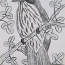Ptič na veji, OGLJE, 40x 30 cm