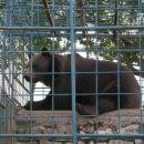 Medved pri Abramu