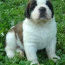 Hundin 5- female 5