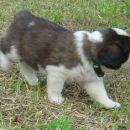 Hundin 4- female 4
