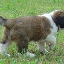 Hundin 2 - female 2