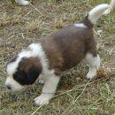 Hundin 1 - female 1
