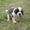 age: 5 weeks