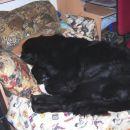 20.11.2007 sem kar zaspala