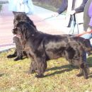09.02.2008 Bruno in Sona