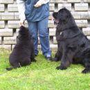02.05.2008 na poligonu se Carlos uči poslušnost