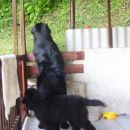 15.05.2008 Carlos ima 3.mesece