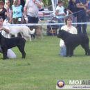 CACIB MARIBOR, 24.09.2006 BIS