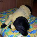 03.12.2006 zdaj lahko v miru zaspim