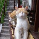 RUMENKO IN LUMPI 11.07.2007