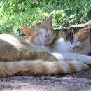 RUMENKO IN MISSY 22.07.2007