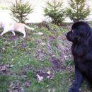 13.02.2007 Sona in Lumpi - midva sva pa res zelo velika prijatelja