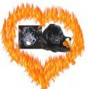 07.03.2007 Sona+Ben ali bo ljubezen goreča?