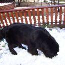 20.03.2007 moj prvi rojstni dan, zapadlo je kar nekaj snega