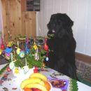 07.04.2007 velikonočna sobota zaenkrat samo ikebana z jajci
