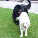 22.06.2007 Ajka in Sona - malo sprostitve