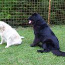 22.06.2007 Ajka in Sona pri treningu