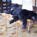 23.06.2007 uživam na mizi