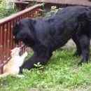 27.06.2007 Sona mrcvari Lumpita