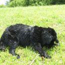 06.07.2007 se sušim in sušim ...
