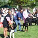 09.09.2007 CACIB UMAG postavitev vseh mladih psov