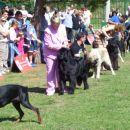 09.09.2007 CACIB UMAG mladi (18 psov)