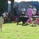 09.09.2007 CACIB UMAG najlepši mladi pes, Sona prejme sedmo mesto