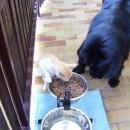 21.07.2007 da ne boš vse pojedel!!!