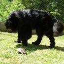 22.07.2007 Sona opazuje želvico