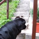 09.08.2007 mačkica Pikica, počakaj me