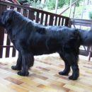 14.09.2007 pogled na drugo stran ograje