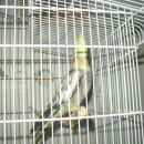 matevževa papiga