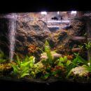 moj akvarij