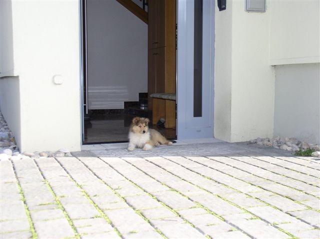 Tako majhen, pa že čuvam celo hišo