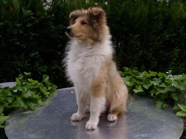 Biba (3 mesece)