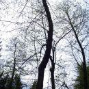 Neznano drevo