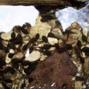 Paglavci - umirjen del potoka