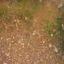 Preperevanje skrilavih glinavcev